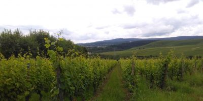 German winery